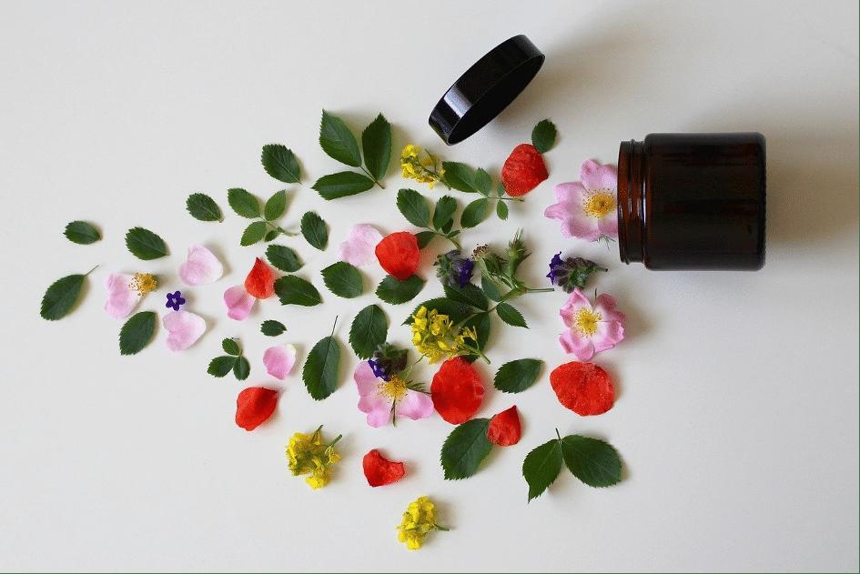 Photo de fleurs et feuilles sortant d'un pot